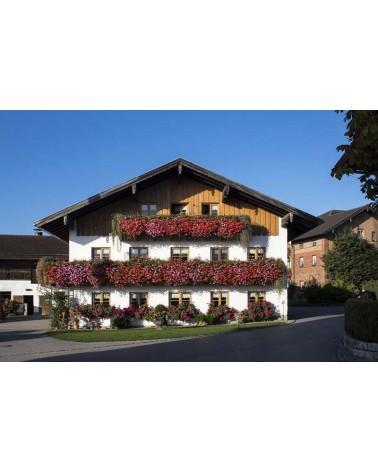 Balcons fleuris Alsace