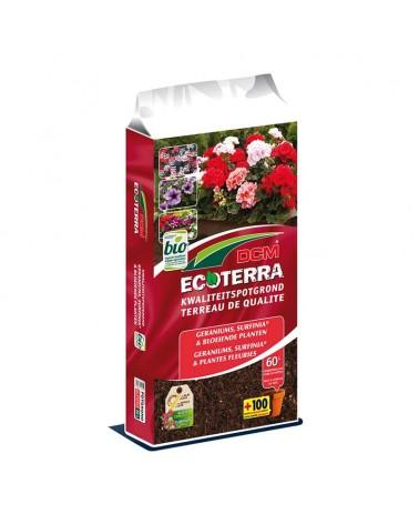 terreau géranium plantes fleuries