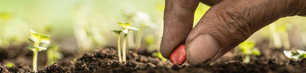 Semences - Vegetosphere - Main qui plante une graine