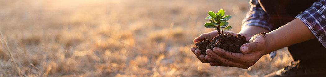 soin des plantes - Vegetosphere -- mains qui protège une plante