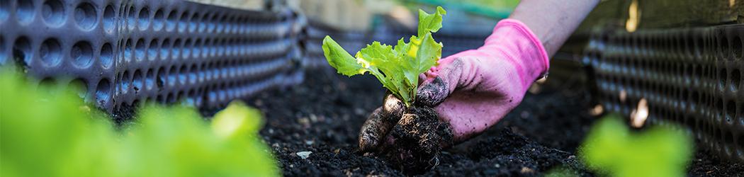 Pousse dans un bac de terre cueilli par un jardinier - illustration Devis