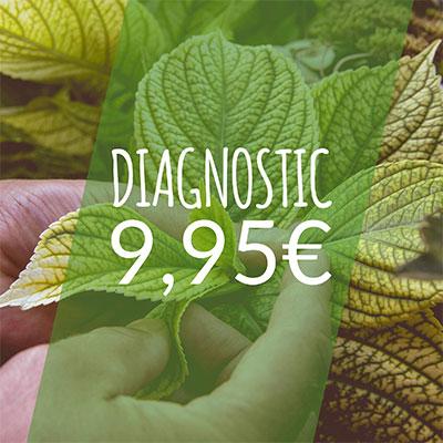 Patrick Makowka coach de Vegetosphere diagnostique une plante en l'examinant de ses mains