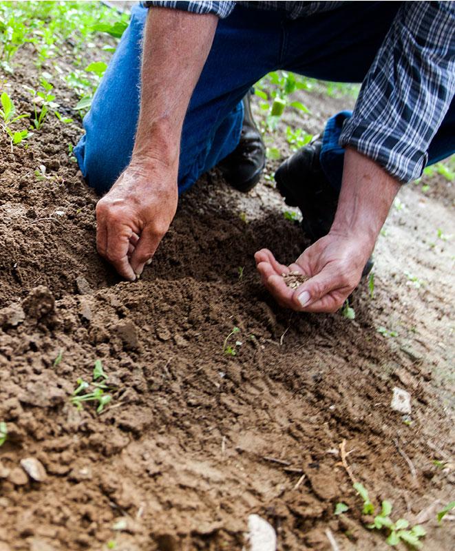 Un jardinier qui plante des graines dans un jardin - Coaching Vegetosphere
